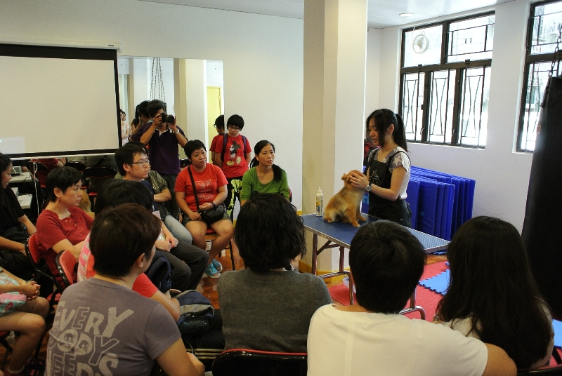 Professional pet groomer demonstrates skills for pet dog grooming