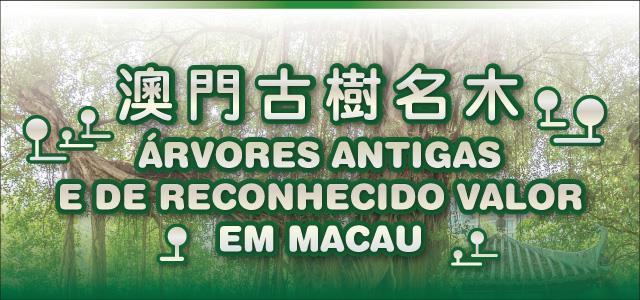 Árvores Antigas e de Reconhecido Valor em Macau