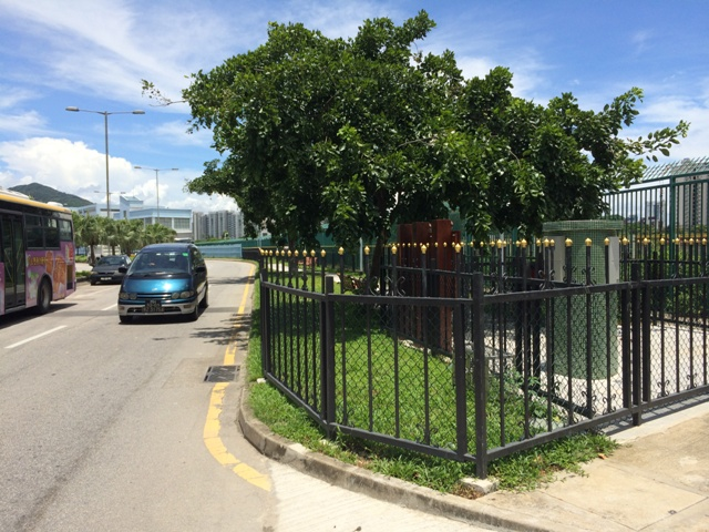 Dog Park in Estrada Marginal da Ilha Verde