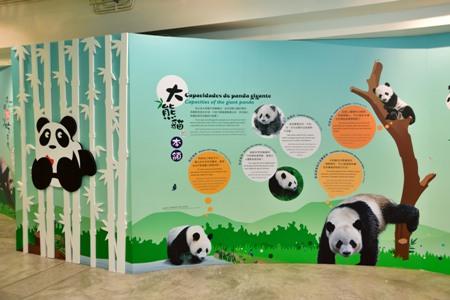 澳門大熊貓資訊中心(暫停開放)