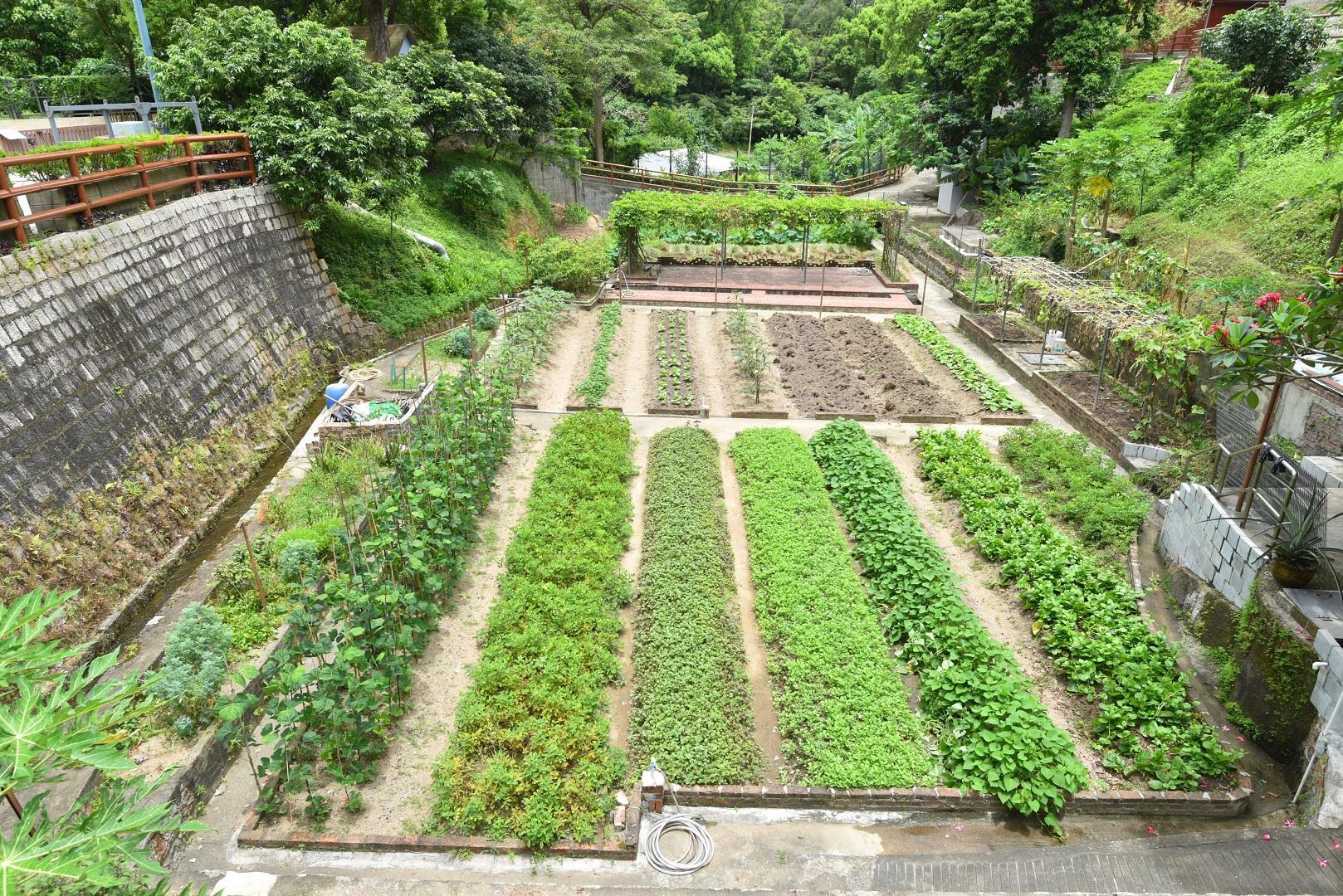 Oscar Farm