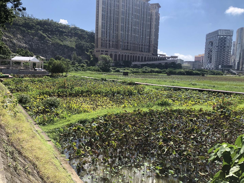 Ecological trail in Avenida da Praia, Taipa