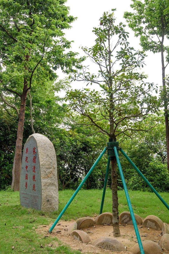 IAM actualiza continuadamente «Lista de Salvaguarda de Árvores Antigas e de Reconhecido Valor»