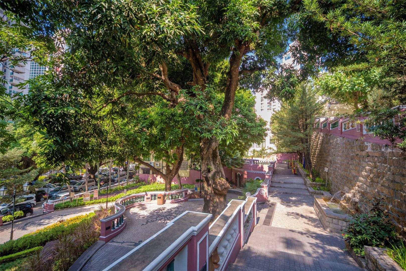 市政署推出澳门古树名木网页 促公众共同保护古树名木