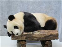 The Giant Pandas