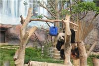 A força dos pandas gigantes