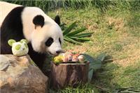 Giant pandas sometimes eat meat