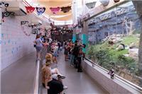 市民及游客探望健健康康庆祝牠们两岁生日