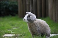 二龍喉「可愛動物區」即日起接受學校及團體預約參觀